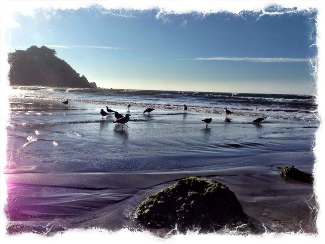 creek sea gulls-1