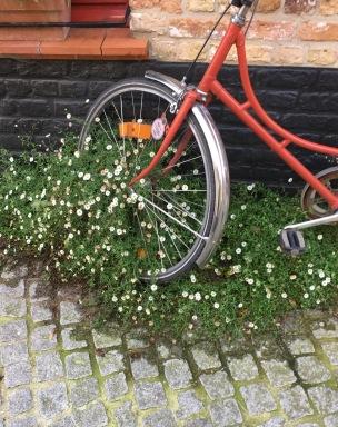ivy bike